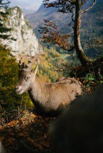 spring hikes in switzerland - creux du van